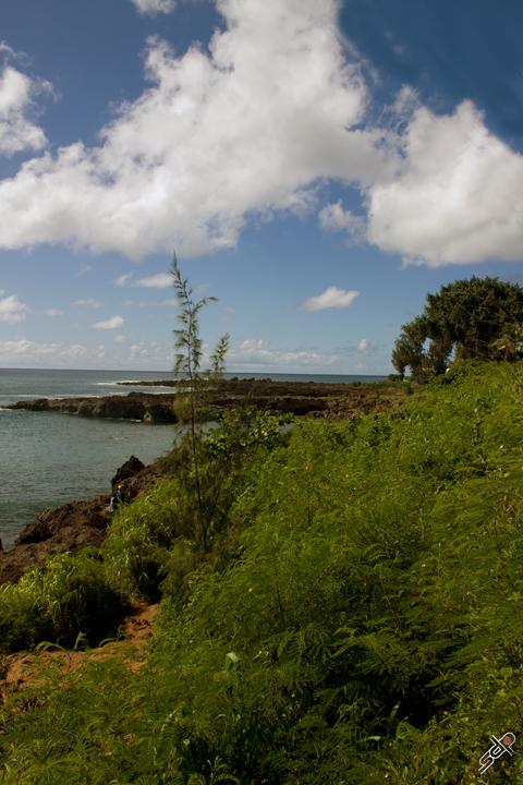 Shark's Cove 10 72