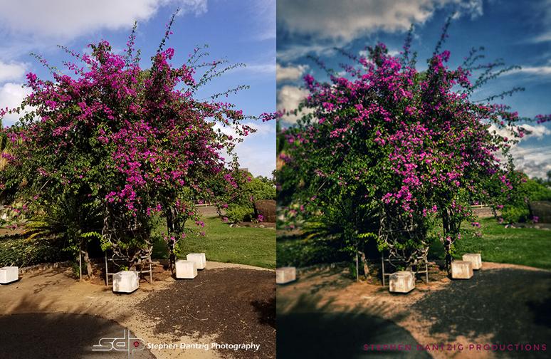 Bougainvillea composite