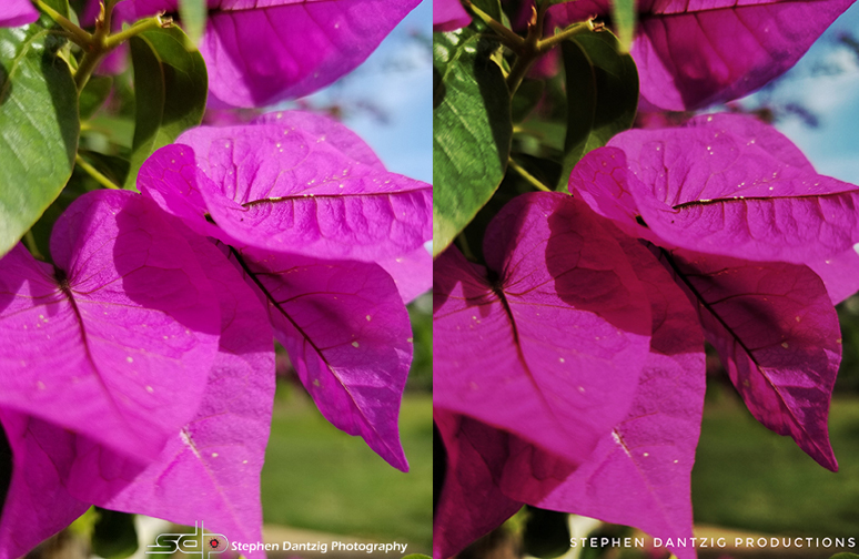 Bougainvillea leaves composite