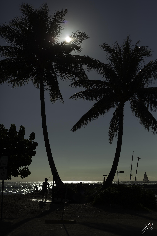 Sunset palms 10